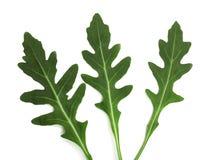 Πράσινο φρέσκο φύλλο rucola ή arugula που απομονώνεται στο άσπρο υπόβαθρο Τοπ όψη Στοκ Εικόνες
