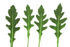 Πράσινο φρέσκο φύλλο rucola ή arugula που απομονώνεται στο άσπρο υπόβαθρο Τοπ όψη Στοκ φωτογραφίες με δικαίωμα ελεύθερης χρήσης