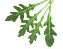 Πράσινο φρέσκο φύλλο rucola ή arugula που απομονώνεται στο άσπρο υπόβαθρο Τοπ όψη Στοκ Φωτογραφίες