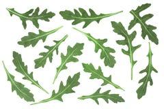 Πράσινο φρέσκο φύλλο rucola ή arugula που απομονώνεται στο άσπρο υπόβαθρο Τοπ όψη Επίπεδος βάλτε το σχέδιο Στοκ Εικόνα