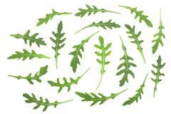 Πράσινο φρέσκο φύλλο rucola ή arugula που απομονώνεται στο άσπρο υπόβαθρο Τοπ όψη Επίπεδος βάλτε το σχέδιο Στοκ Φωτογραφία