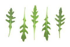 Πράσινο φρέσκο φύλλο rucola ή arugula που απομονώνεται στο άσπρο υπόβαθρο Τοπ όψη Επίπεδος βάλτε το σχέδιο Σύνολο ή συλλογή Στοκ Εικόνες