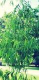 πράσινο φυλλώδες δέντρο Στοκ φωτογραφία με δικαίωμα ελεύθερης χρήσης