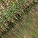 πράσινο φυσικό πρότυπο Στοκ εικόνα με δικαίωμα ελεύθερης χρήσης