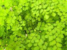 πράσινο φυτό κινηματογραφή Στοκ Εικόνες