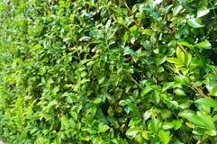 Πράσινο φυτό, μικρή σύσταση χλόης φύλλων Στοκ εικόνες με δικαίωμα ελεύθερης χρήσης
