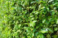Πράσινο φυτό, μικρή σύσταση χλόης φύλλων Στοκ Εικόνα