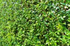 Πράσινο φυτό, μικρή σύσταση χλόης φύλλων Στοκ εικόνα με δικαίωμα ελεύθερης χρήσης