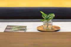 πράσινο φυτό μικρό στοκ εικόνες