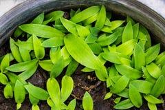 πράσινο φυτό μικρό στοκ εικόνα με δικαίωμα ελεύθερης χρήσης