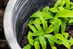 πράσινο φυτό μικρό στοκ εικόνα