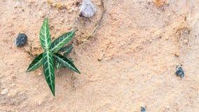 πράσινο φυτό μικρό Στοκ εικόνες με δικαίωμα ελεύθερης χρήσης
