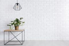 πράσινο φυτό σε δοχείο Στοκ Φωτογραφίες