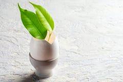 Πράσινο φυτό φύλλων νεαρών βλαστών από eggshell την έννοια αναγέννησης Στοκ εικόνες με δικαίωμα ελεύθερης χρήσης