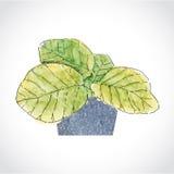 Πράσινο φυτό φύλλων στο πέτρινο δοχείο Στοκ Εικόνες