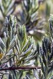 Πράσινο φυτό φύλλων Στοκ εικόνα με δικαίωμα ελεύθερης χρήσης