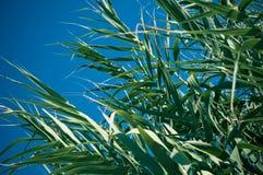 πράσινο φυτό Στοκ Φωτογραφία