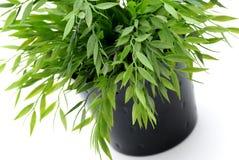 πράσινο φυτό Στοκ φωτογραφίες με δικαίωμα ελεύθερης χρήσης