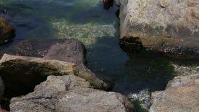 Πράσινο φύκι με τις πέτρες στη θάλασσα απόθεμα βίντεο