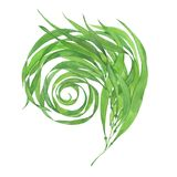 Πράσινο φύκι Watercolor απεικόνιση αποθεμάτων