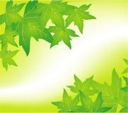 πράσινο φύλλο ανασκόπηση&sigmaf Στοκ Εικόνες