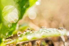 πράσινο φύλλο δροσιάς Στοκ Εικόνες