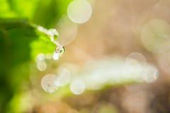 πράσινο φύλλο δροσιάς Στοκ φωτογραφία με δικαίωμα ελεύθερης χρήσης
