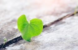 Πράσινο φύλλο καρδιών βαλεντίνων στο ξύλινο υπόβαθρο στοκ εικόνα