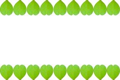Πράσινο φύλλο καρδιών βαλεντίνων συνόρων στο άσπρο υπόβαθρο με το αντίγραφο Στοκ Φωτογραφία