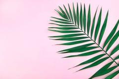 πράσινο φύλλο καρύδων Στοκ Εικόνες
