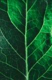Πράσινο φύλλο κινηματογραφήσεων σε πρώτο πλάνο Στοκ εικόνες με δικαίωμα ελεύθερης χρήσης