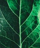 Πράσινο φύλλο κινηματογραφήσεων σε πρώτο πλάνο Στοκ Εικόνα