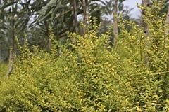 πράσινο φύλλο κλάδων στοκ εικόνες