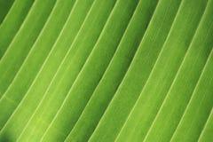 πράσινο φύλλο λεπτομέρει& Στοκ Εικόνα