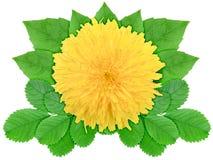 πράσινο φύλλο λουλουδιών κίτρινο Στοκ φωτογραφίες με δικαίωμα ελεύθερης χρήσης