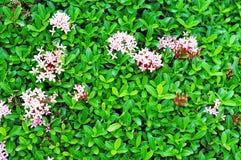 πράσινο φύλλο λουλουδιών Στοκ Εικόνες