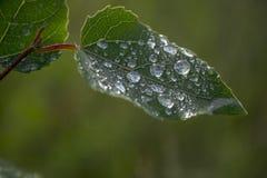 Πράσινο φύλλο με το νερό στο φύλλο Στοκ φωτογραφίες με δικαίωμα ελεύθερης χρήσης