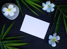 Πράσινο φύλλο μπαμπού και άσπρο λουλούδι plumeria στο μαύρο υπόβαθρο Στοκ Εικόνες