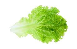 πράσινο φύλλο σαλάτας Στοκ Εικόνα