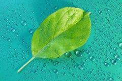 πράσινο φύλλο της Apple σε μια μπλε κινηματογράφηση σε πρώτο πλάνο υποβάθρου Απελευθέρωση νερού ξέν. Στοκ φωτογραφίες με δικαίωμα ελεύθερης χρήσης