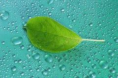 πράσινο φύλλο της Apple σε μια μπλε κινηματογράφηση σε πρώτο πλάνο υποβάθρου Απελευθέρωση νερού ξέν. Στοκ Εικόνες
