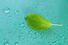 πράσινο φύλλο της Apple σε μια μπλε κινηματογράφηση σε πρώτο πλάνο υποβάθρου Απελευθέρωση νερού ξέν. Στοκ Φωτογραφία