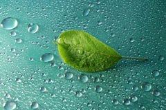 πράσινο φύλλο της Apple σε μια μπλε κινηματογράφηση σε πρώτο πλάνο υποβάθρου Απελευθέρωση νερού ξέν. Στοκ εικόνα με δικαίωμα ελεύθερης χρήσης