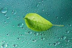 πράσινο φύλλο της Apple σε μια μπλε κινηματογράφηση σε πρώτο πλάνο υποβάθρου Απελευθέρωση νερού ξέν. Στοκ εικόνες με δικαίωμα ελεύθερης χρήσης