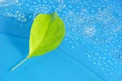 πράσινο φύλλο της Apple σε μια μπλε κινηματογράφηση σε πρώτο πλάνο υποβάθρου Απελευθέρωση νερού ξέν. Στοκ φωτογραφία με δικαίωμα ελεύθερης χρήσης