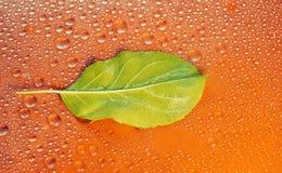 πράσινο φύλλο της Apple σε μια πορτοκαλιά κινηματογράφηση σε πρώτο πλάνο υποβάθρου Απελευθέρωση νερού φ Στοκ Εικόνα