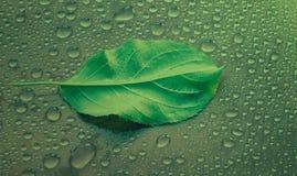 πράσινο φύλλο της Apple σε μια πράσινη κινηματογράφηση σε πρώτο πλάνο υποβάθρου Απελευθέρωση νερού ξέν. Στοκ Εικόνες
