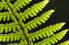 πράσινο φύλλο φτερών στοκ εικόνα