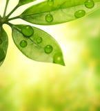 πράσινο φύλλο Στοκ φωτογραφίες με δικαίωμα ελεύθερης χρήσης