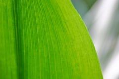 πράσινο φύλλο Στοκ Εικόνες